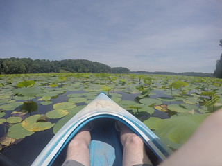 Kayak in the Lillies