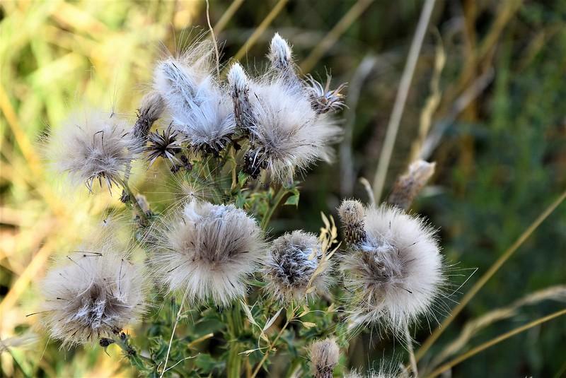 Wild Flowers 16.07 (1)