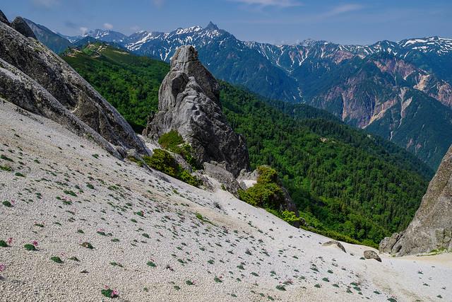 斜面にはコマクサが沢山群生している