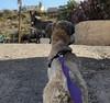 Maggie meets a burro