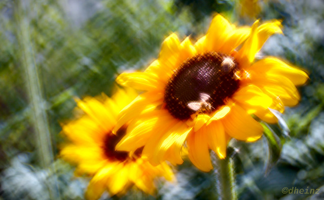 Impressionism - Sunflowers with bees