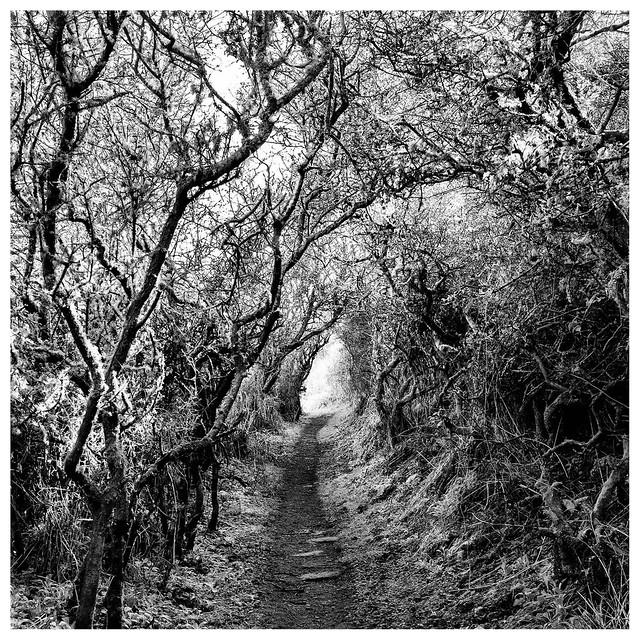 The Dark Hedge, Kinkell, Fujifilm X-Pro1, XF27mmF2.8