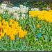 Memories of spring 2 by JAKE473