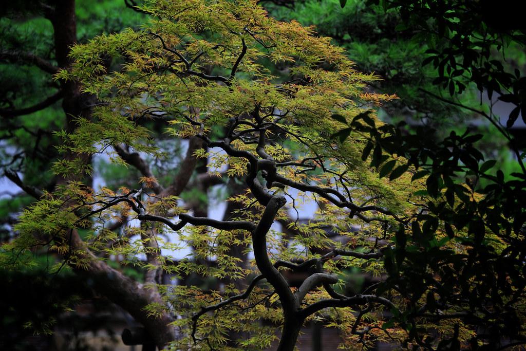 Natural Zen At Heirin-ji Temple