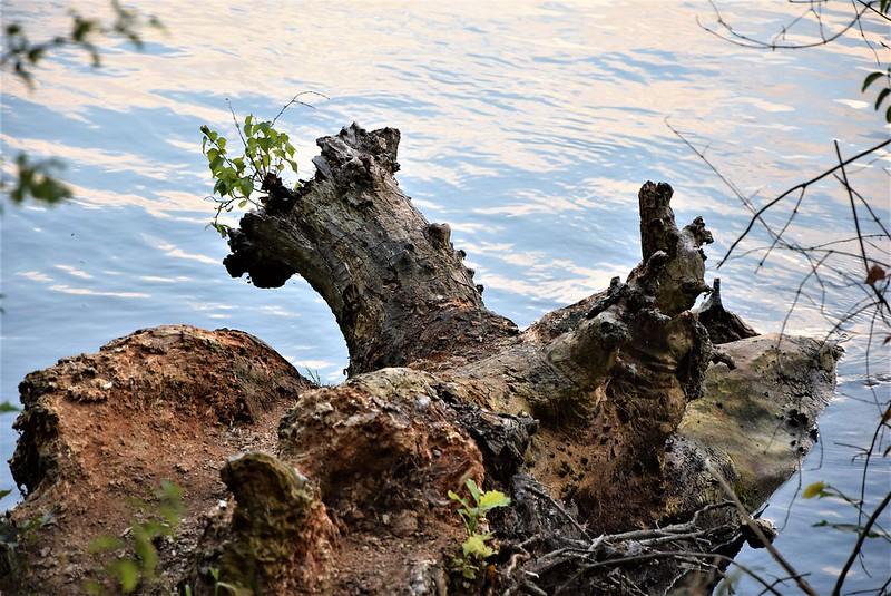 River Aar 20.07 (23)