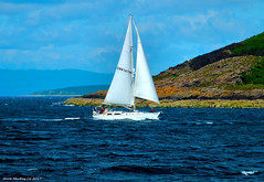 Scotland West Highlands Argyll a yacht GBR1676R passing the island of Cumbrae 16 July 2017 by Anne MacKay