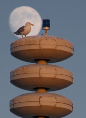 This gull is in the spotlight