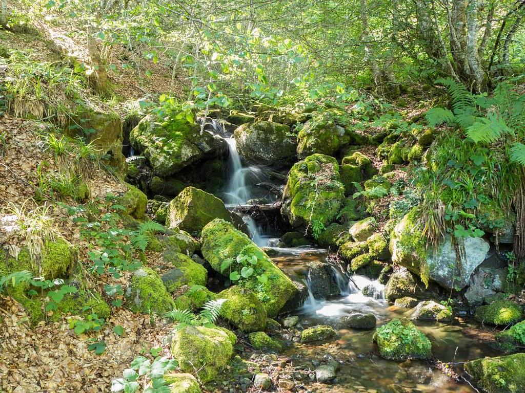 Rincones de Picos de Europa. #picosdeeuropa #olympus #olympusomd #travelphoto #photography #senderismo