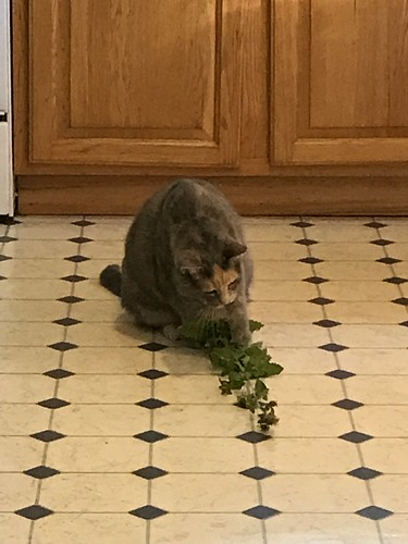 Sunday morning treat of catnip