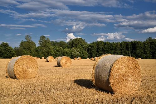 Dans les champs, c'est les moissons