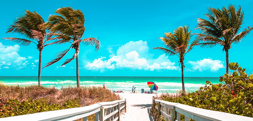 hollywoodnorthbeachpark miamifl waterways walking walkingaround beach beachscape blue coconuttree seashore seascape beachshore outdoors hotday umbrellas