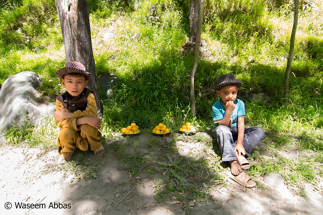 Little Appricot Sellers