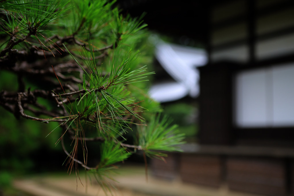 Zen Sensibility At Heirin-ji