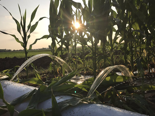 6-14-2017 PerryCo Irrigation Sunset-Lawson