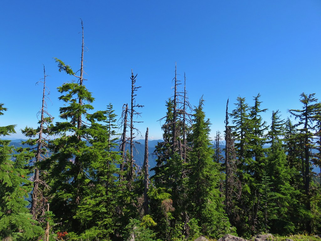 Mt. Jefferson and Three Fingered Jack from Chucksney Mountain