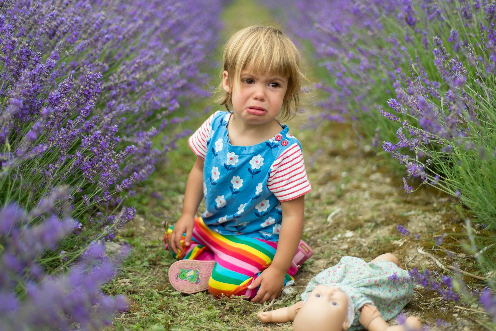 lavender_5
