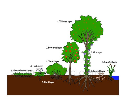 Edible Landscaping and Permaculture
