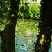 20170717-01_Reflections - River Leam - Royal Leamington Spa