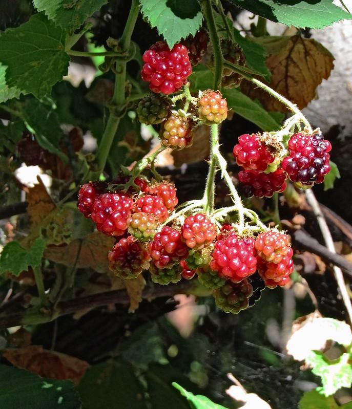 IMG_0765-crop