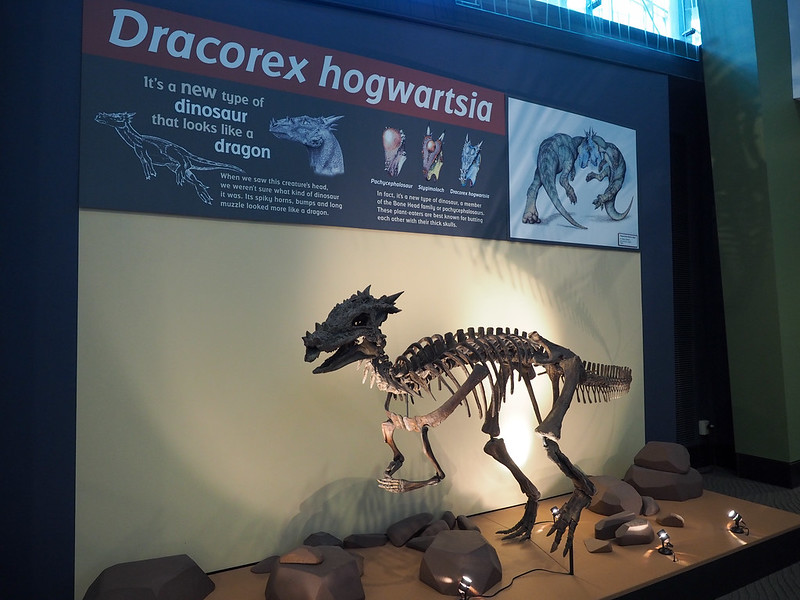 Dracorex hogwartsia at Indy Children's Museum