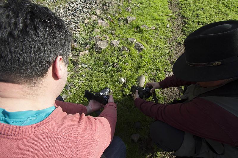 encontrando hongos
