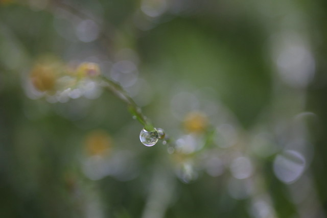 :: the spirit within me ::, Canon EOS 70D, Canon EF-S 60mm f/2.8 Macro USM