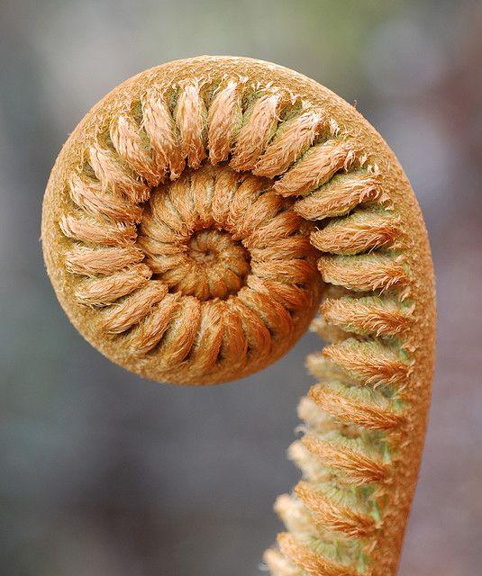 5c85f7be0adc4e0f8800c73d48290751--fibonacci-sequence-in-nature-fibonacci-spiral
