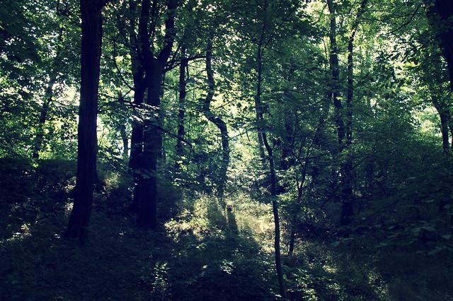 le silence dans la forêt