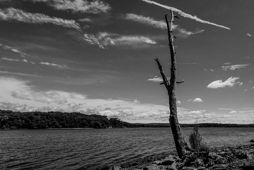 afsnikkor1635mmf4vr d750 hudsonriver nikond750 landscape wideangle blackandwhite bw monochrome gdajewski dajewski river rzeka woda nikon1635mmf4 fx fullframe wide drzewo