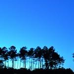 Photos des lecteurs | Bleu des Landes - un soir de ciel clair