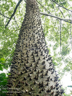 Spiky Tree