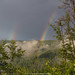Neckarsteinach June Rainbow 2017 I