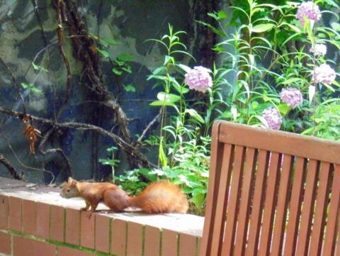 Hörnchen im Hofgarten