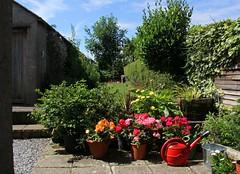 Our Garden - Summer 2017