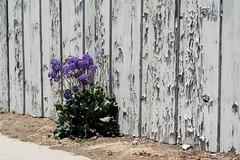 Fresh coat of paint not needed