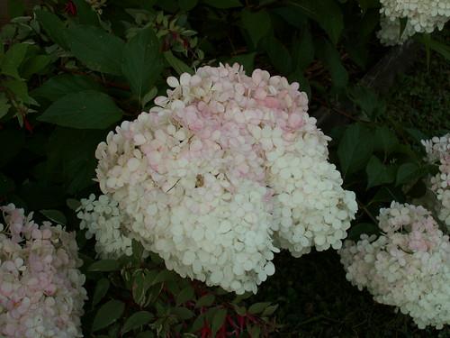 c'est chouette l'été au jardin ! - Page 2 35842203340_a4e7d9e145