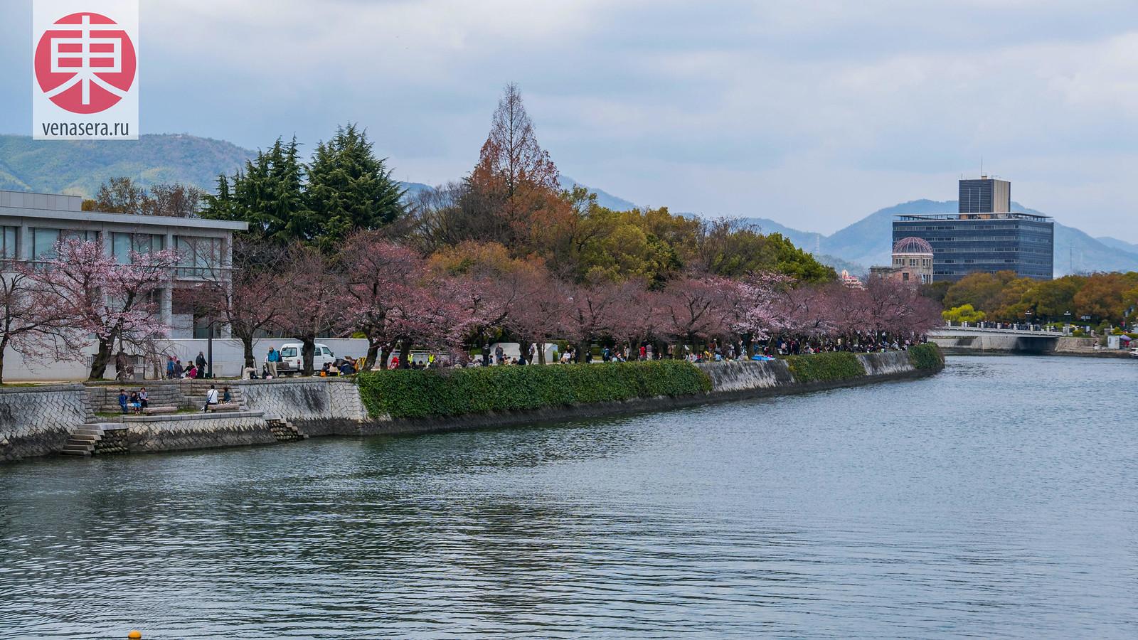 Сакура в г. Хиросима, Атомный купол, Япония.