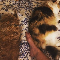 Five years later, the girls haven't figured out that we sized up from a double bed. #cuddly, #cramped, #dogsofinstagram, #catsofinstagram, #notreallycomplaining