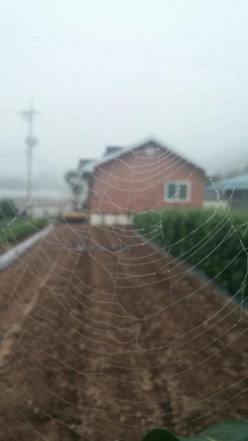 아침풍경 | 거미줄
