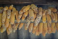 Corns hanging at the wooden house