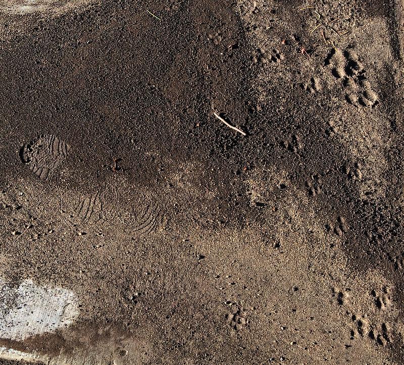 foorprints_in_mud-20170719-100