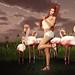 Flamingo Posse