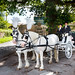 Horse and Carriage, Clearwell Castle, Forest of Dean, Gloucestershire