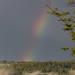 June Rainbow 2017