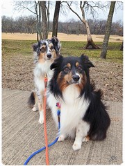 C'mon Dad... We promise not to chase ALLL those squirrels if you just take these leashes off!