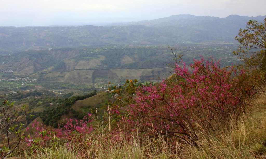 The flower filled slopes of Bir
