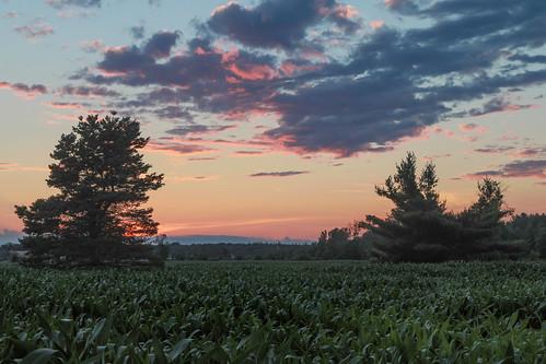 canoneos5dmarkiv sunset atardecer cornfield pine pinetree tree evening july 2017 mi midland michigan midmichigan midwest summer verano clouds hazy