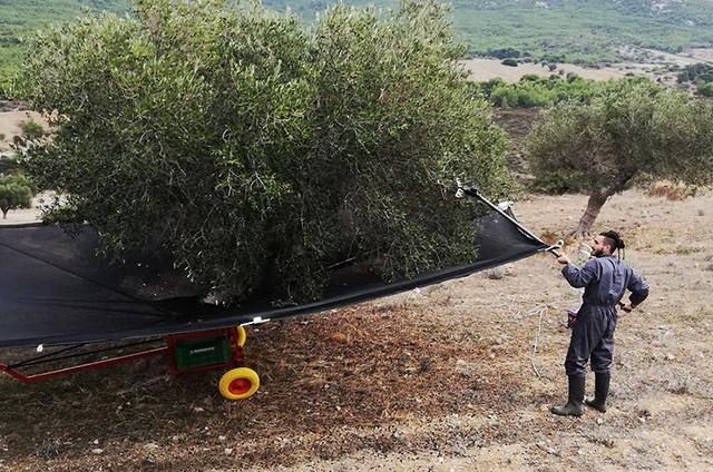 photo of Olive farmer in Greece
