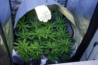 iluminación cultivo de marihuana