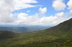 Atlantic Forest, South East Brazil, Morettes - No Text